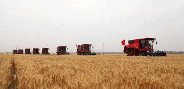 河北:2022年强筋小麦将达500万亩