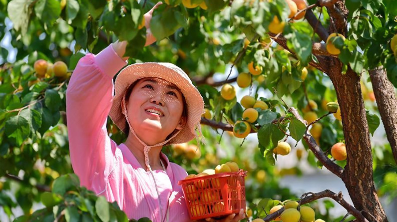 河北唐山:融合发展助力乡村振兴