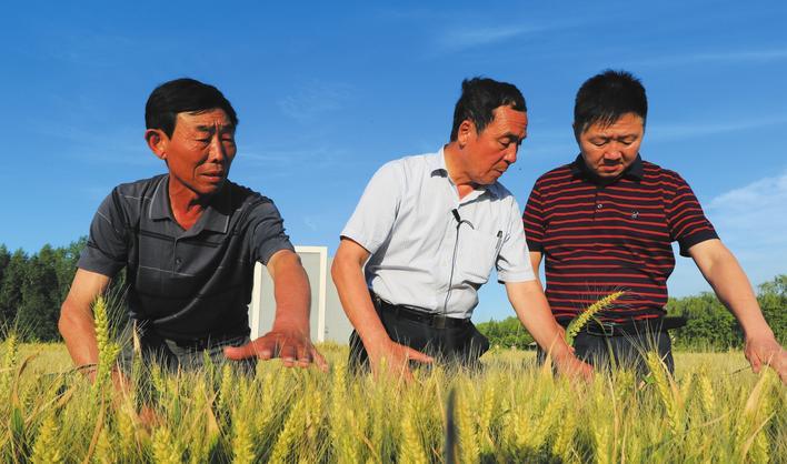宋福如和他的硅谷农业科学研究院