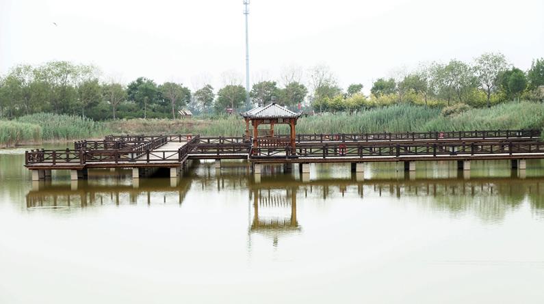 【高清组图】南大港湿地美景如画