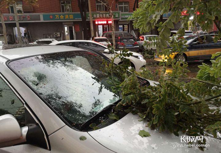 视频|狂风暴雨突袭石家庄,多棵大树被刮倒