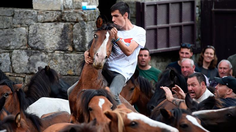 """西班牙一村庄举办年度传统节日 民众与野马""""较劲""""场面惊险刺激"""