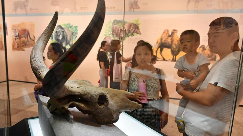 """石家庄:""""冰河巨兽""""现身河北博物院 民众感受遥远冰河时代"""