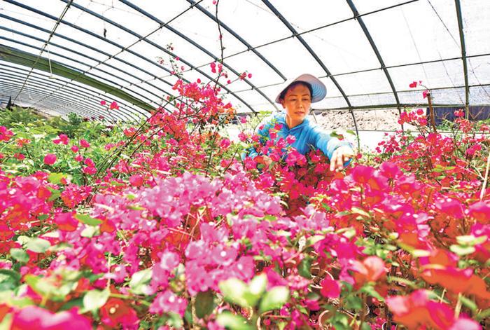 滦州特色种植 盘活城郊乡村经济