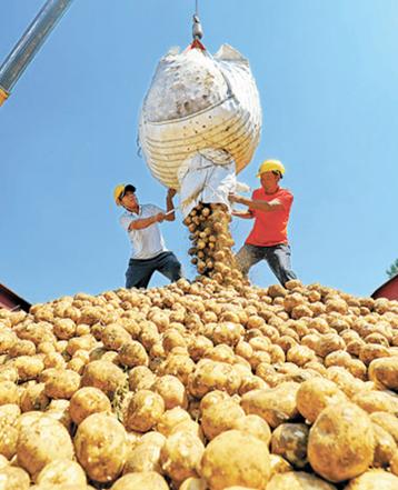 """滦南: """"订单土豆"""" 助农增收"""