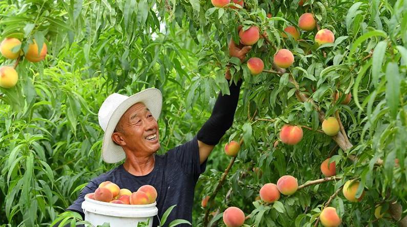 河北滦南:壮大果蔬产业 助推乡村振兴