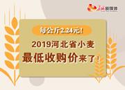 2019河北省小麦最低收购价来了