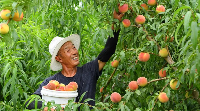 滦南:壮大果蔬产业 助推乡村振兴