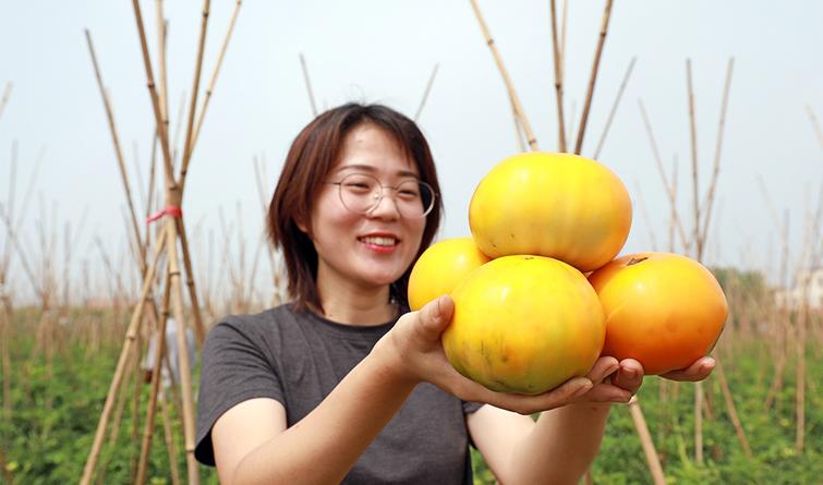 河北滦南:太空蔬菜助农增收