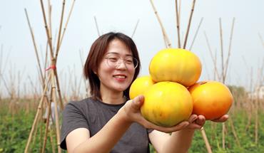 河北灤南:太空蔬菜助農增收