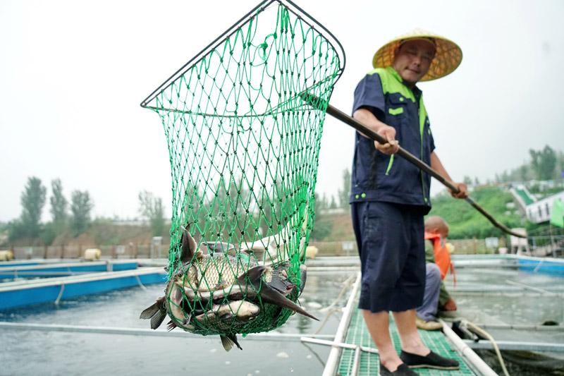 河北迁安:废弃矿坑变鱼塘