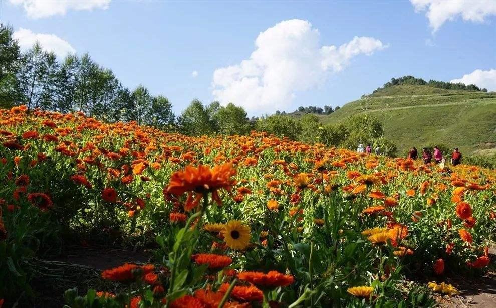 河北省上半年休閑農業和鄉村遊人數4200萬人次