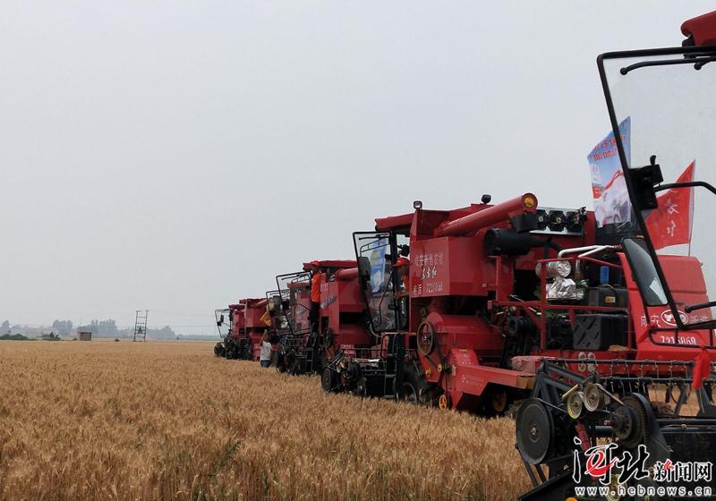 总产量1476.6万吨!河北省夏粮喜获丰收