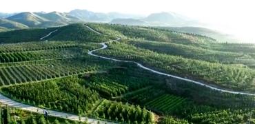 7大类优势特色产业引领河北现代农业发展