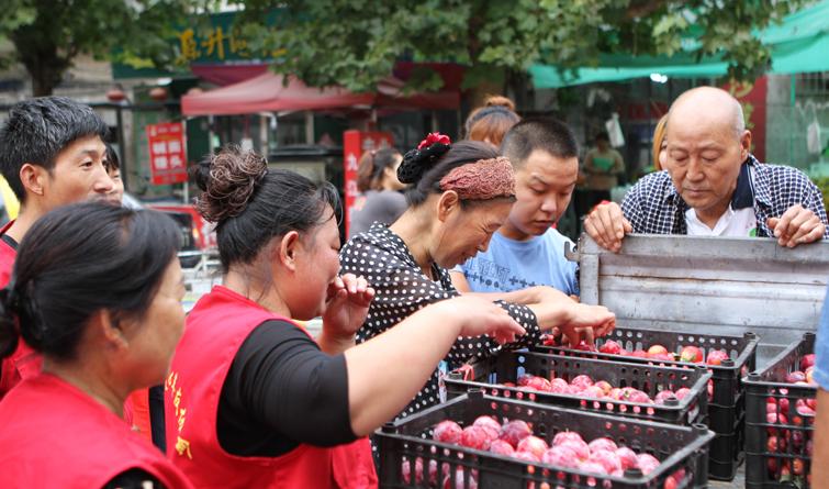 晋州市:全城热买爱心李? 志愿服务暖人心