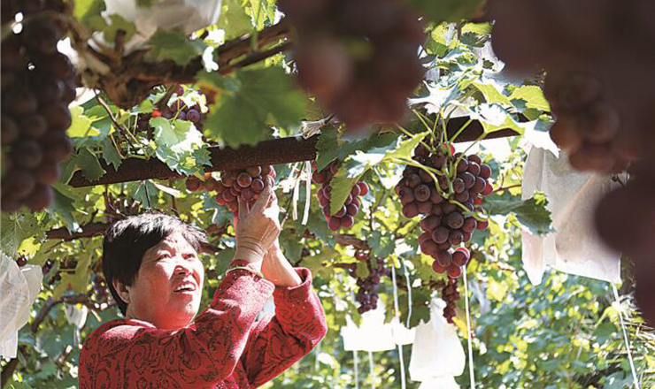 生态农业——绿了乡村富了民