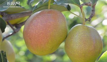 赵县:优化果树种植模式 助推果品提质增效