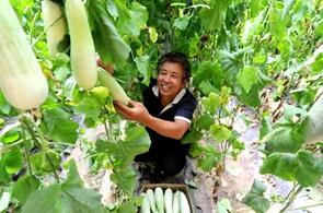 """【科技农业】临西:跑出农业现代化""""加速度"""""""