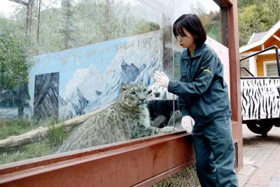 青藏高原上90后美女饲养员与雪豹的冰雪奇缘