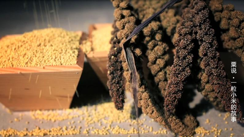 【微视频·粟说②】一粒小米与江山社稷