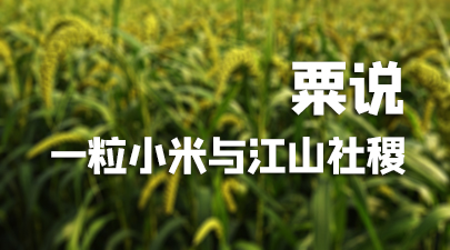 在中国,几乎所有的省区都能看到谷子的踪迹。