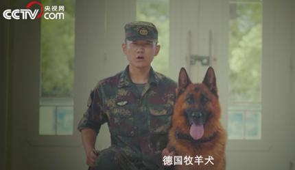 """泪目!火箭军军犬""""奶爸""""为千条犬接生,却错过自己孩子出生"""