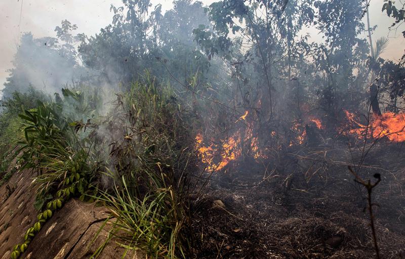 秘鲁农民为开荒焚烧热带雨林