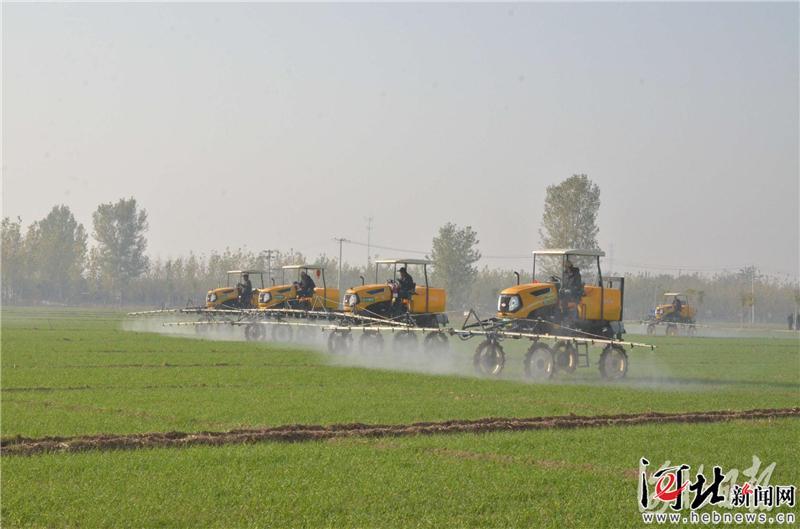 今年河北推广小麦节水品种及配套技术536万亩