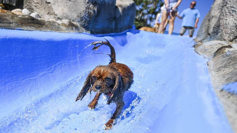 """美国科罗拉多州迎来""""狗狗海滩日"""" 萌犬在水世界""""撒欢"""" 引瞩目"""