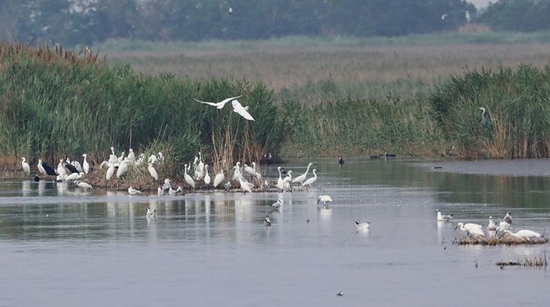 河北沧州南大港湿地:美景正当时