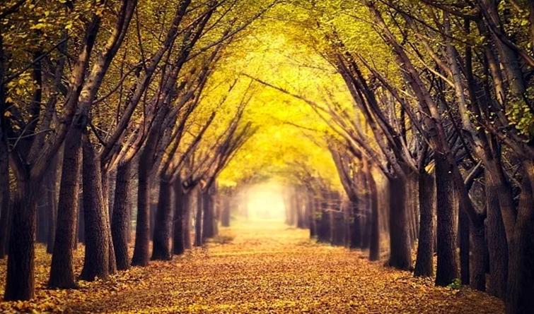 惊艳双眼!25个中国最美赏秋地,河北是它