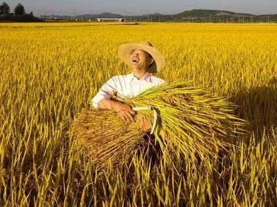 农民丰收节期间 河北2地活动将在全国网络直播