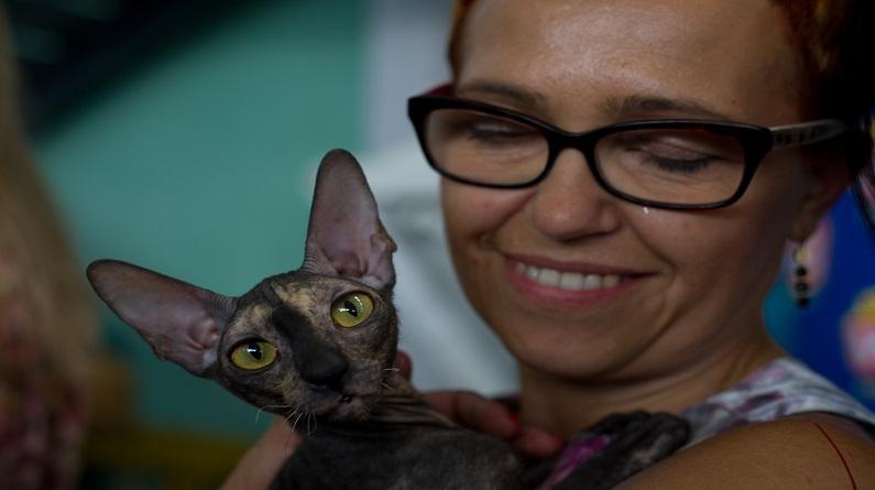 萌萌哒 华沙举行国际猫展