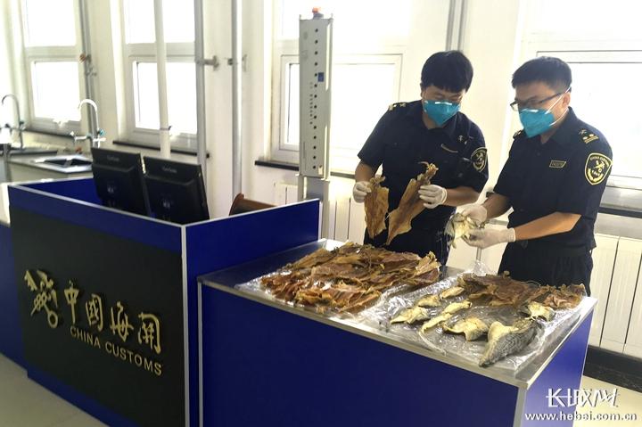 黄骅港海关查获禁止进境携带物