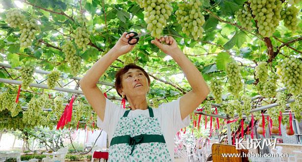 农业稳农村美农民富 河北迈向农业农村现代化新时代