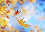 丰收节去处全攻略秋季出行典籍