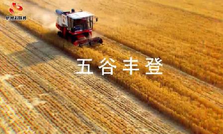 【视频】河北·丰收啦!