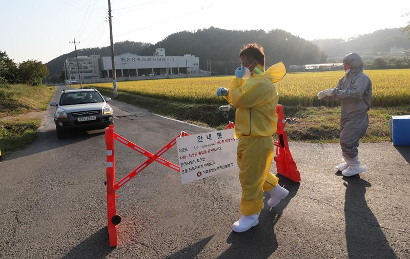 韩国一屠宰场现疑似猪瘟
