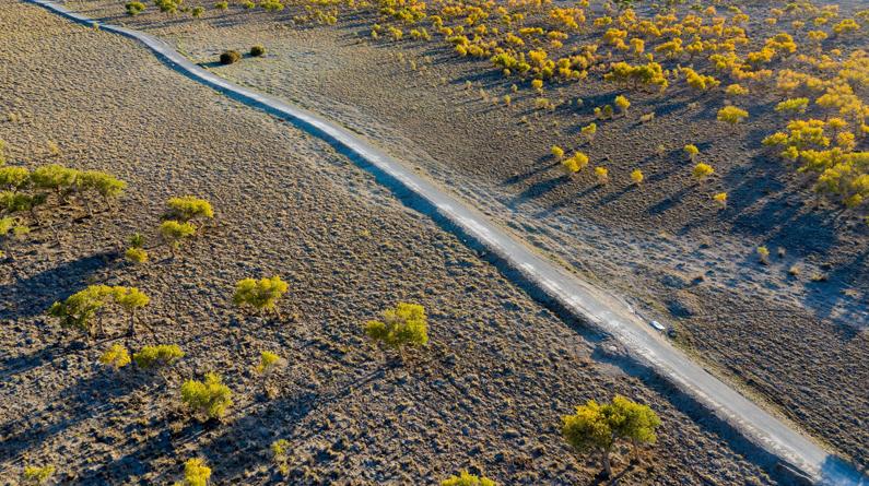 新疆哈密:航拍胡杨林 戈壁滩上一道风景线