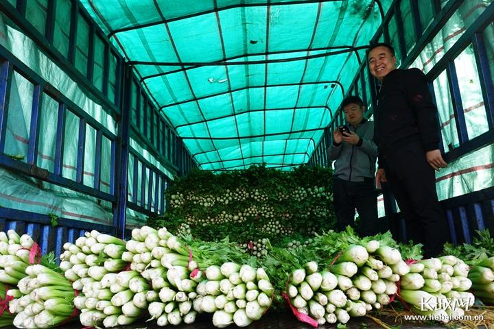 3万多斤尚义西芹认购一空,爱心助农我们在行动!