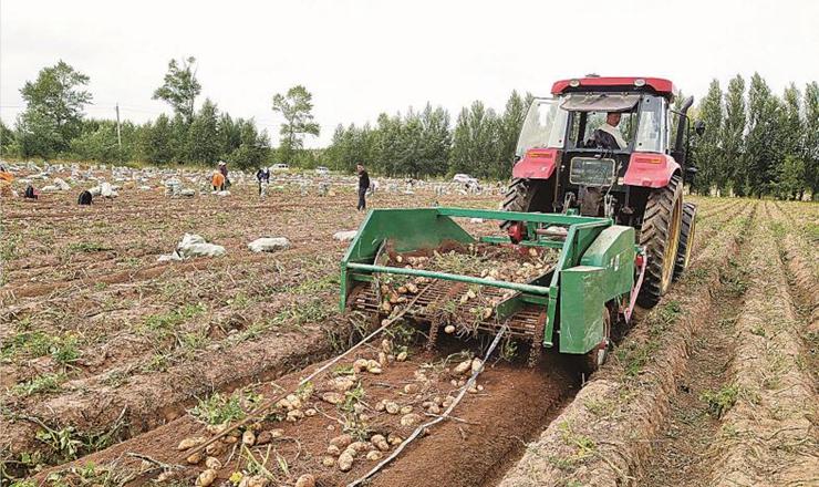 围场74万亩马铃薯喜获丰收