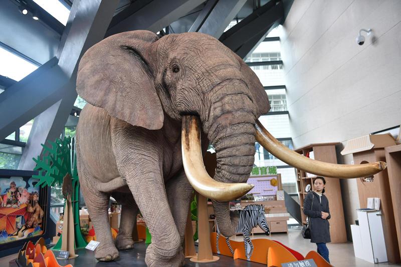 巨型非洲草原象标本亮相成都