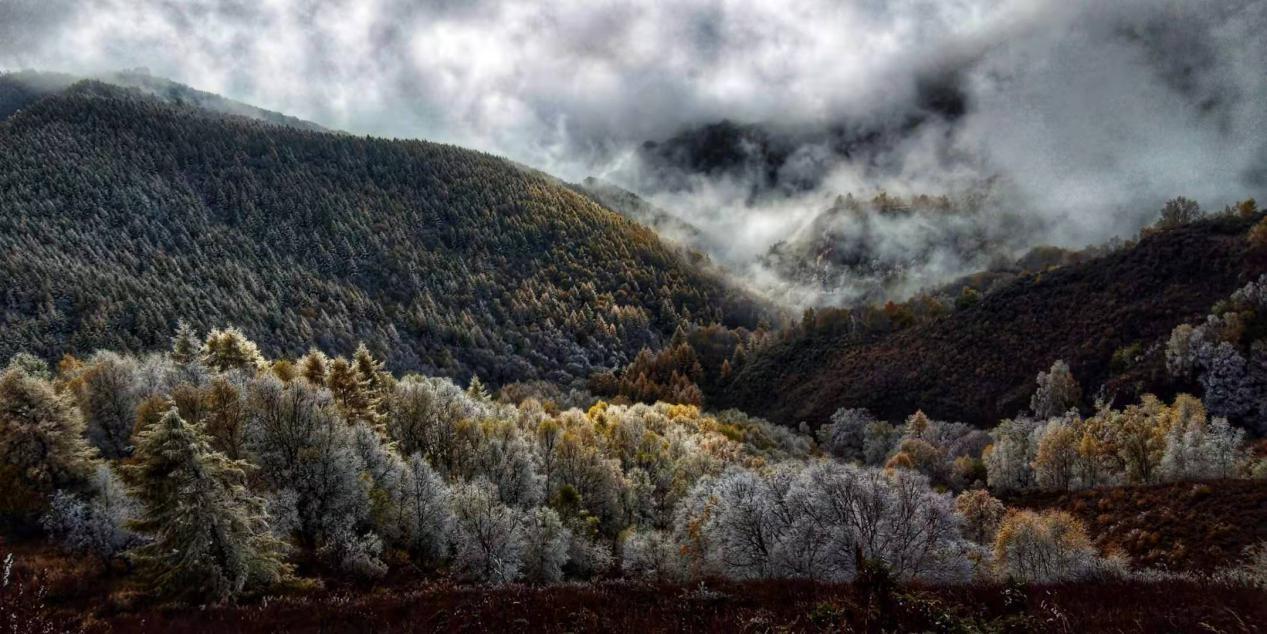 下雪了!驼梁迎来入秋第一场雪