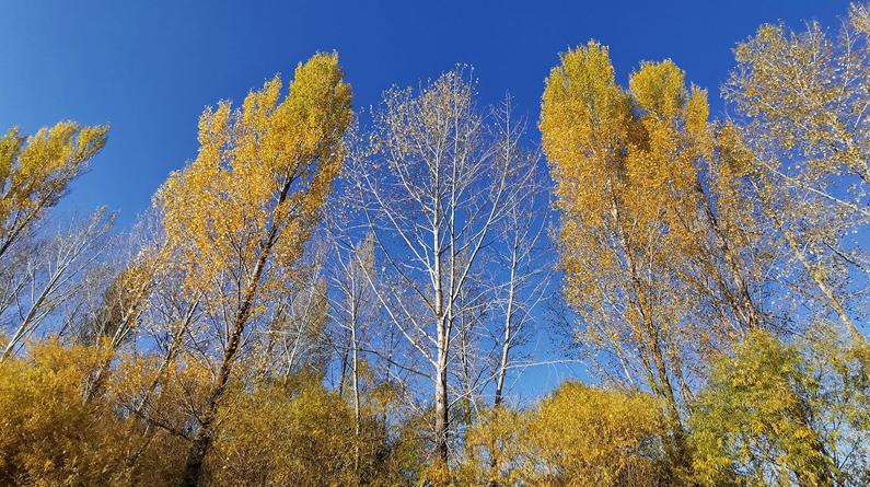 高清组图|围场的秋① 苍茫万顷连
