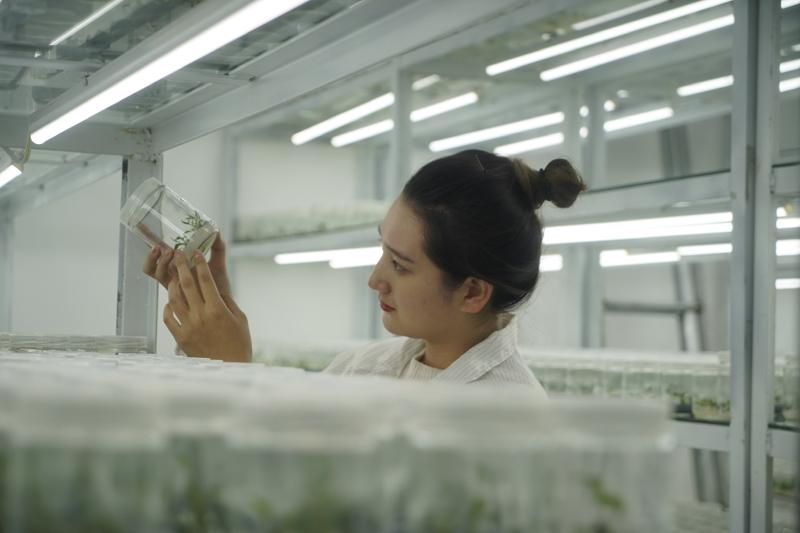 中药材种植助农增收