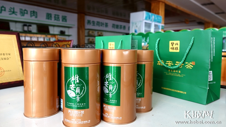 【壮丽70年·奋斗新时代·品牌农业河北行】白洋淀飘出荷茶香