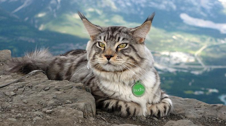 """拒绝当""""宅喵"""" 加拿大小猫咪随主人远足探险看遍山水风光"""