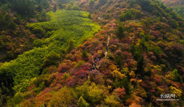 漫山红遍!一起去仙台山看红叶吧
