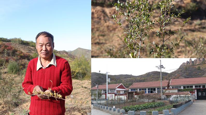 【来自扶贫一线的报告】龙潭村:夏有花,秋有果,连翘连起脱贫路