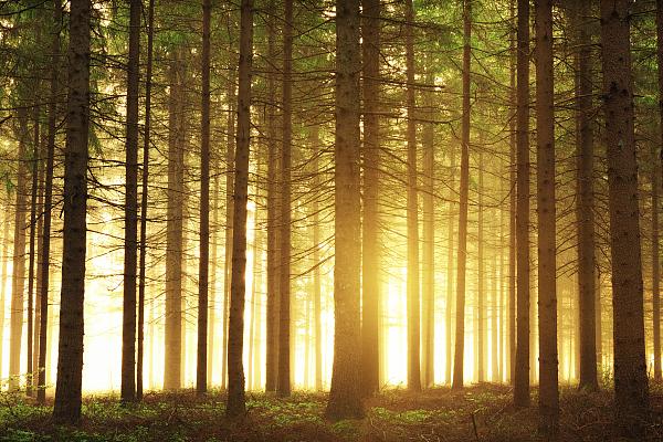 迅速掀起秋冬造林热潮